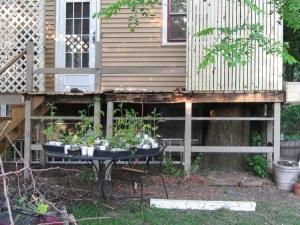 Rot and ants extend across the entire front of the deck and into most of the joists.