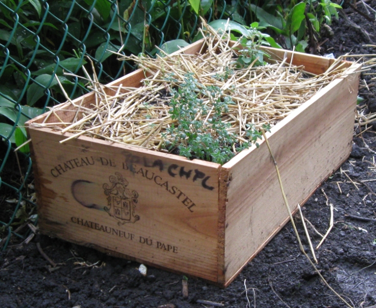 I didn't save much room for herbs other than basil so I planted a mixure in one of my old wine crates collecting dust in the attic. Drilled a few holes in the bottom, filled with mix, two store-bought plants and lots of seeds. It will likely be too small but what the hell.