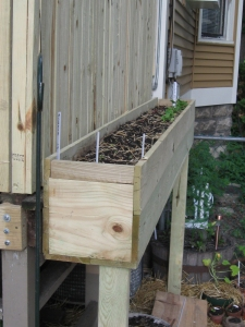 This is the short box where we have baby spinach, romaine, onions, Japanese bunching onions and mache.