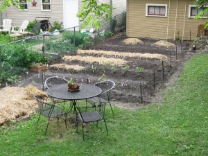 Vegetable garden is planted, mostly.