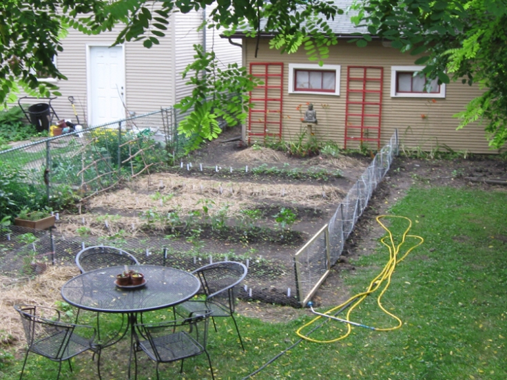 At last, Buddha has a new home overlooking the veggie garden, the vegetables are fenced off from the rabbits, and my bean trellises are stained red with a fadable stain that should soften with age.