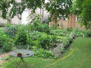 Here's the big green mess as it is today. Hard to tell where things begin and end inside the fence.