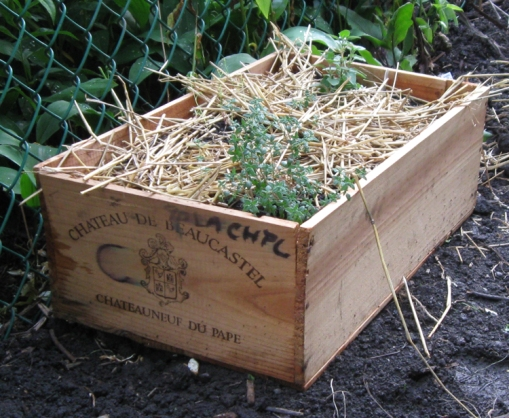 My most embarrassing ugly vegetable garden photos from for Where can i find old wine crates