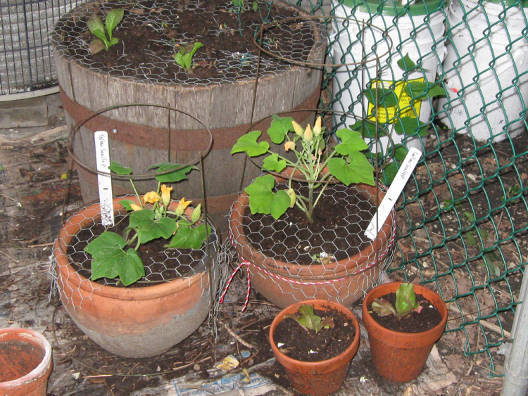 March 2010 snarkyvegan - How to keep squirrels from digging in garden ...