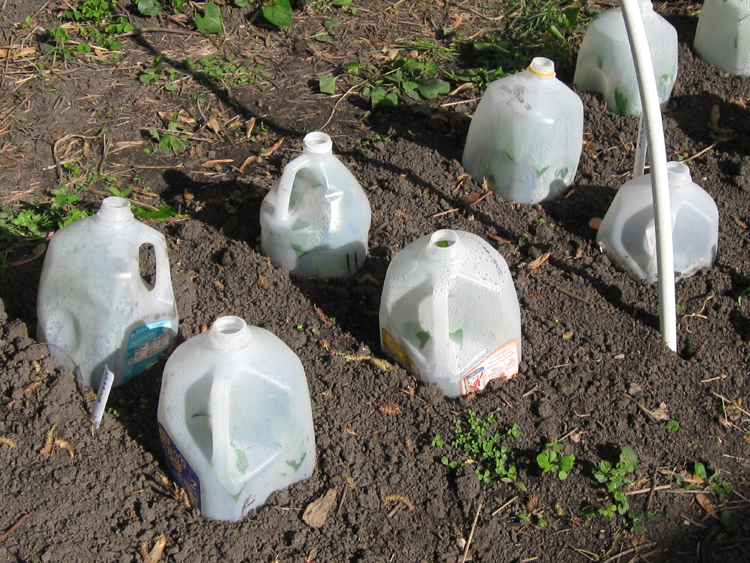Totally Ugly Yet Cheap Cloches To Keep Frost Off Your