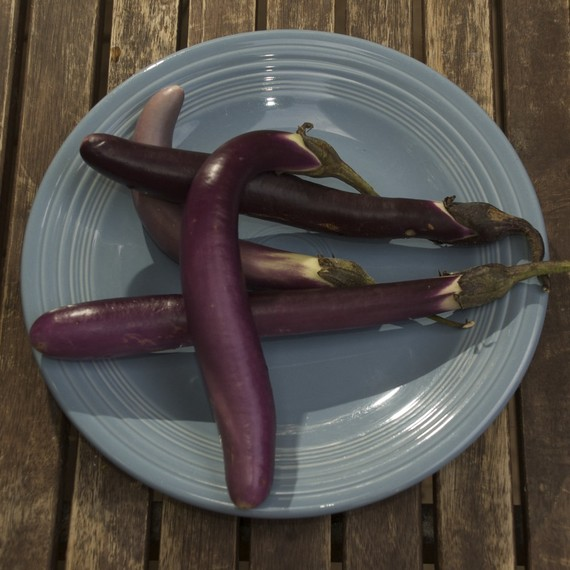 Organic Little Finger Eggplants, just perfect for roasted salads.