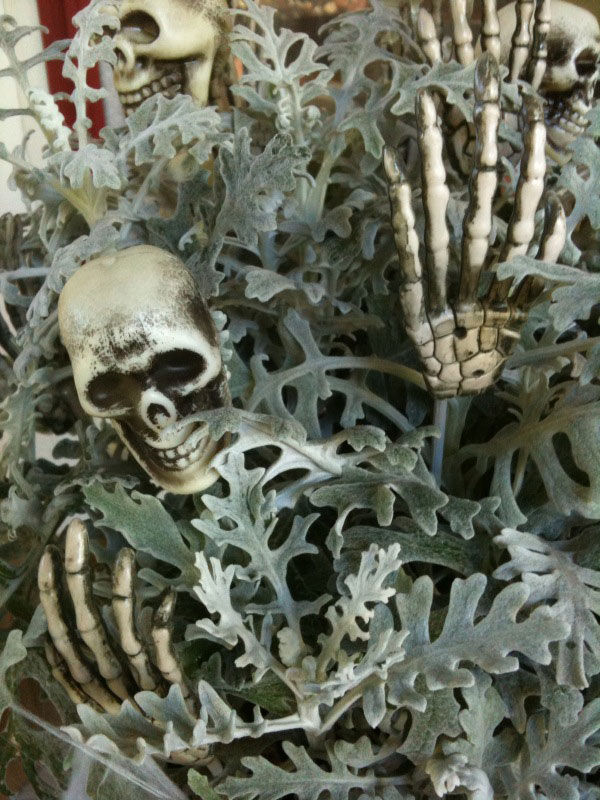 Dusty Miller looks great with skulls and bones in a porch planter.